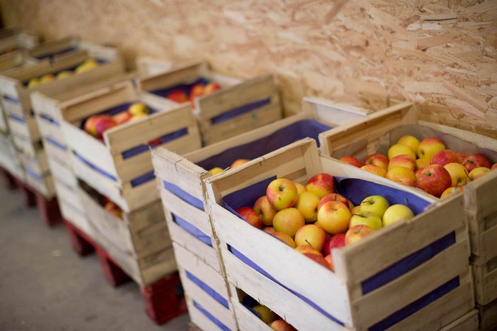 ... et plusieurs variétés de pommes
