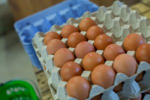 Oeufs, produits laitiers, fromages